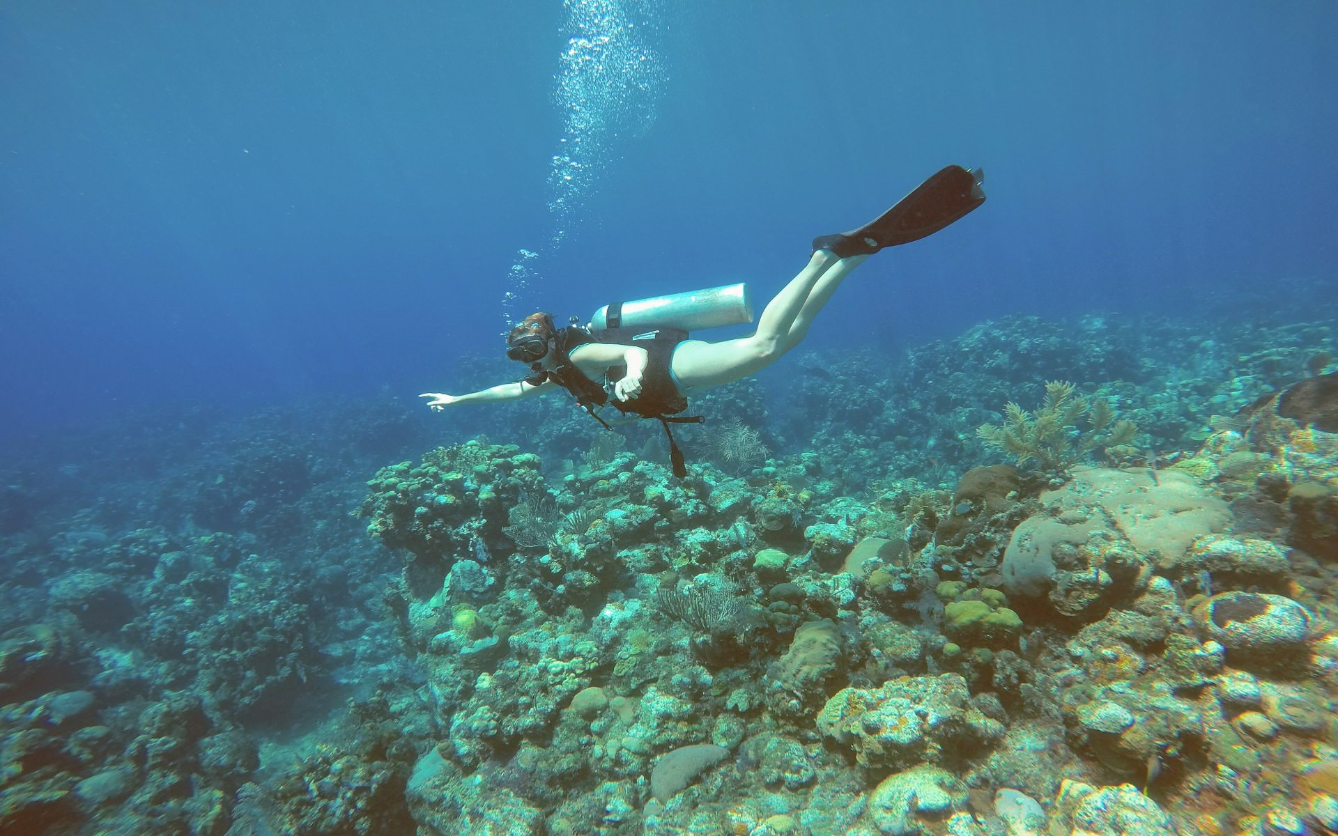 scuba diving in roatan